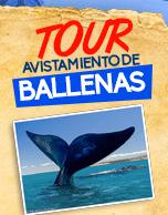Tour Avistamiento de Ballenas 2016