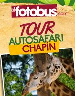 Tour Autosafari Chapin 2015
